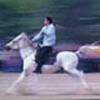 Cirit A Traditional Turkish Equestrian Sport