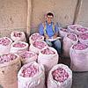 Roses, Bags Of Roses