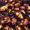 Turkish Chestnut