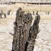 Detail of a stake, the harbor of Theodosius